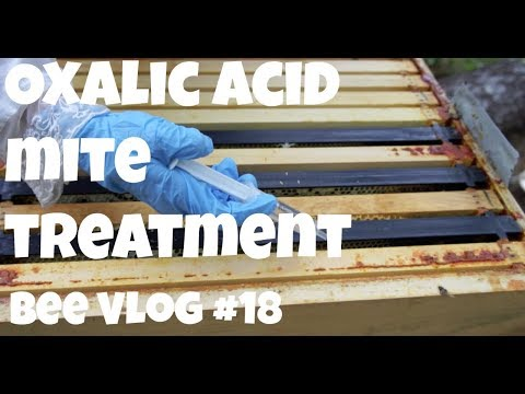 Oxalic Acid Dribble Method Mite Treatment - Getting Bees Ready for Winter    Bee Vlog #18