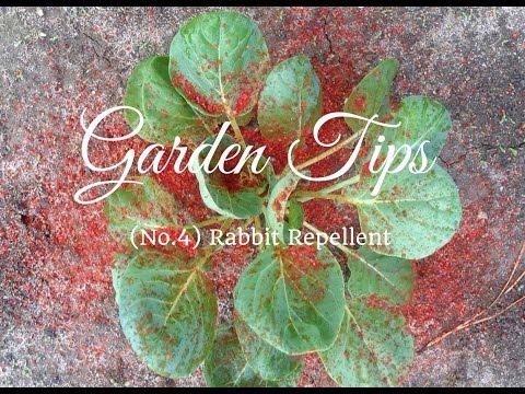 How to make Pepper Spray Rabbit Repellent (Garden Tip No. 4)