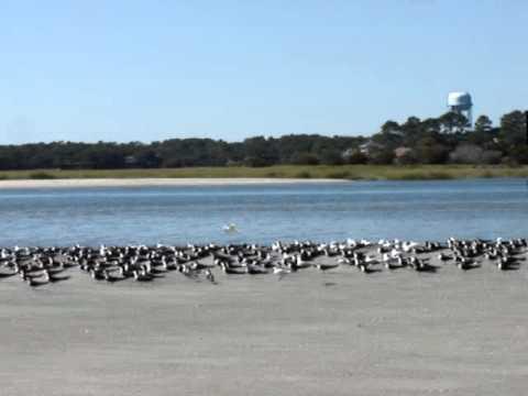 Kiawah Birds