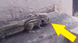 Man Gets The Sweetest Reward After Nursing A Baby Squirrel Back To Life