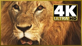 4K UHD Beautiful Footage Demo