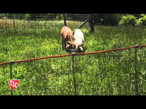 How to Choose Goat Fencing