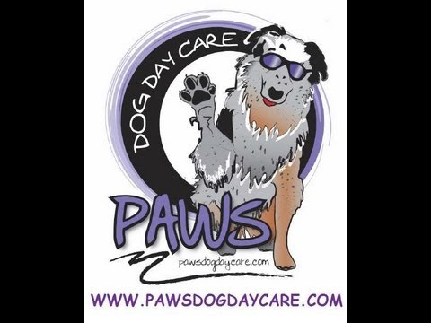 How to Start A Dog Daycare Series (Selecting A Location)