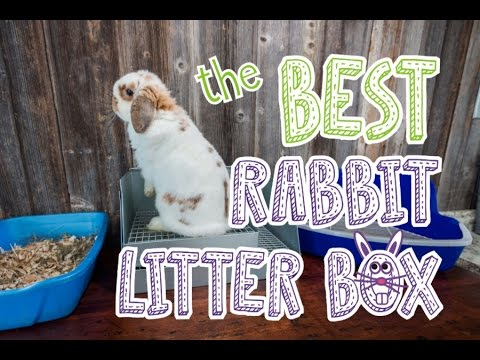 Rabbit Litter Box Comparison