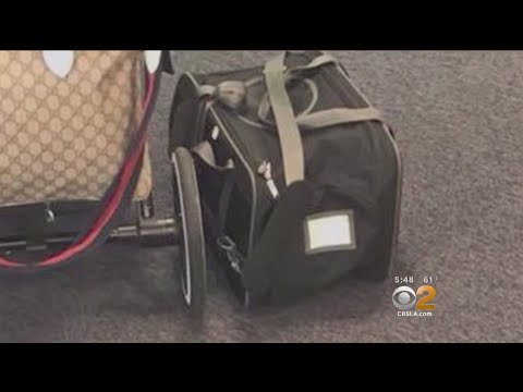 2 On Your Side: Flying With Your Pets
