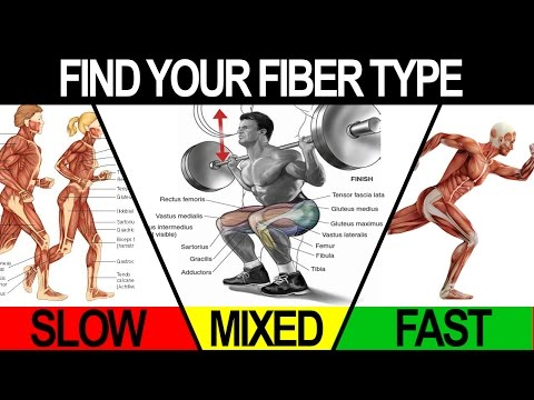 Gym Workouts to Build Muscle (TRAIN TO MAXIMIZE YOUR FIBER TYPE!)