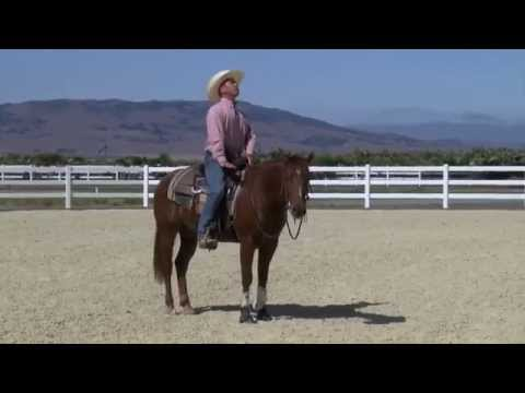 How to Get Your Horses Head Down