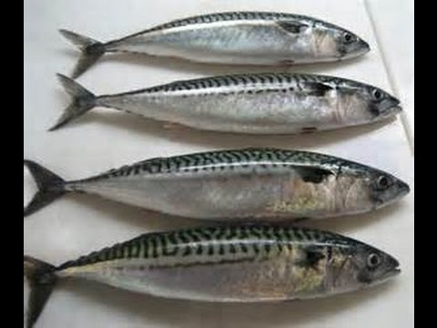 How TO MAKE / FRY MACKEREL FISH.