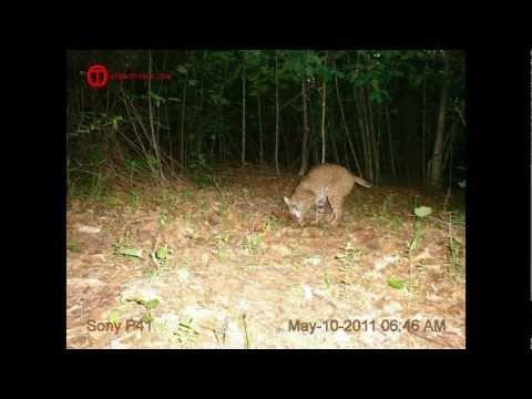 Homebrew Trail Cam Photo Contest