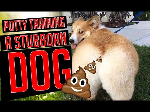 Top 5 Secrets to Potty Training A Stubborn Dog | Potty Train your Puppy Easily