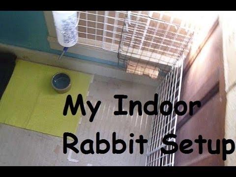 Indoor rabbit setup