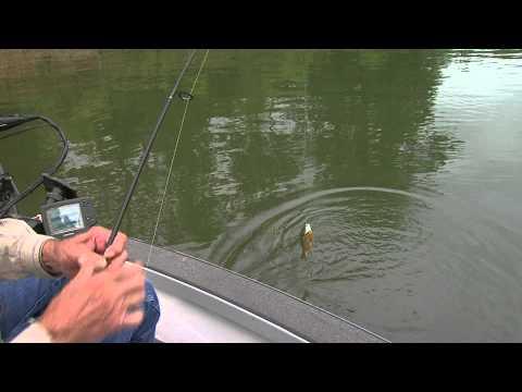 Bluegill Fishing with Roy Kenady