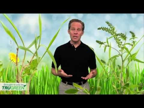 Weed Control | Keep Weeds at Bay by Maintaining a Healthy, Green Lawn