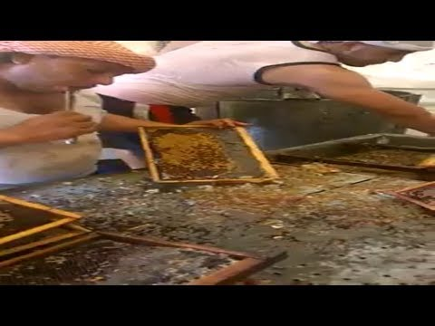 World record honey harvesting!!!!!!!!!!!!!