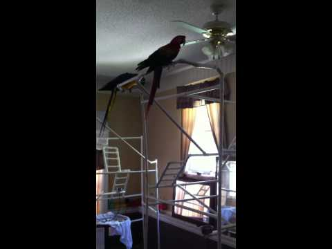 What you can build for your Macaw