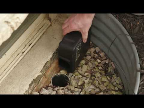 Prevention Tips for Mice & Rats by TOMCAT