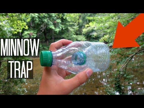 Minnow Trapping!! Homemade Water Bottle Trap! Does it work?