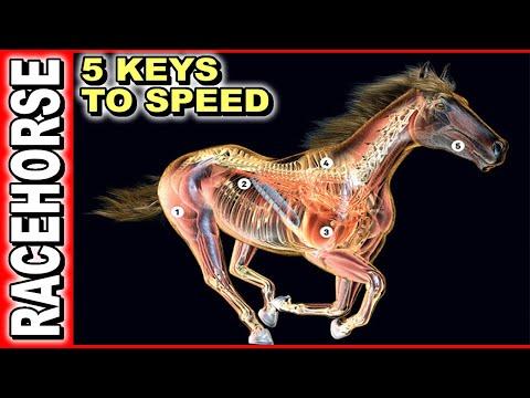 5 Keys To Race Horse Speed