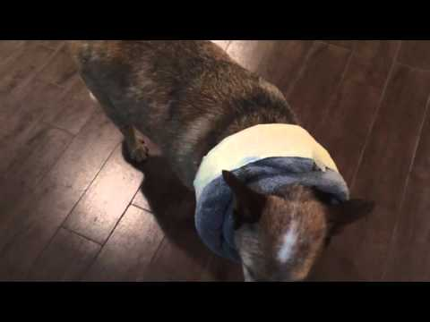 DIY DOG CONE ALTERNATIVE e-collar