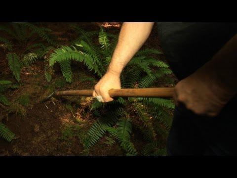 Oregon White Truffle Hunting With Jack Czarnecki