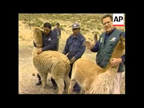 Andes lab working to genetically improve Alpaca wool quality