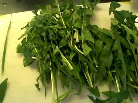 Dandelions, cleaver, plantain & lemon herbal punch for kidneys & lymphatic system!