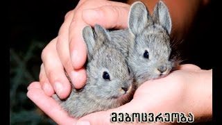 mebocvreoba mcire fermerebisatvis. Rabbit small farmers