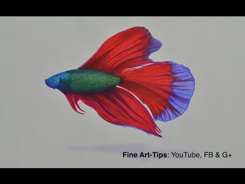 How to Draw a Beta Fish With Color Pencils and Markers