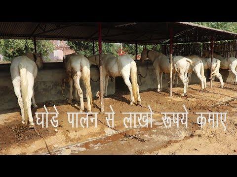 घोड़ा व्यवसाय कैसे करे, How to make a horse business