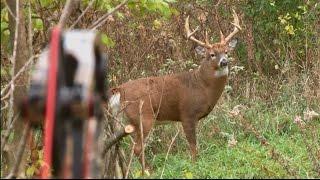 Bowhunting Deer: Boom or Bust 2015 Deer Hunt