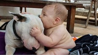 Cute Bull terrier Dogs and Adorable Babies - Funny Dog loves baby Compilation