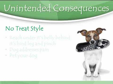 Dog Training Without Treats - It Can Be Done