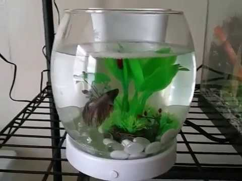 Elive betta bowl and planter review