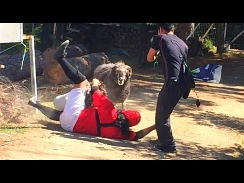 Behind the scenes - When Angry Ram took on the Japanese comedian