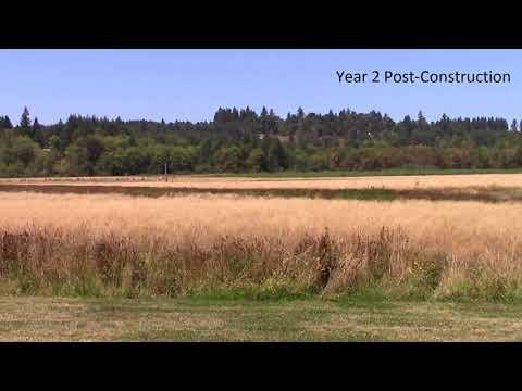 East Fork Lewis Wetland Mitigation Bank