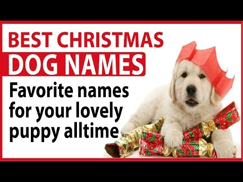 best christmas dog names favorite names for your lovely puppy alltime - Christmas Pet Names
