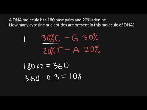 How to find nucleotide ratio of the DNA