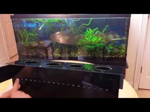 Indoor Aquaponics System- How to grow vegetables in your aquarium the easy way