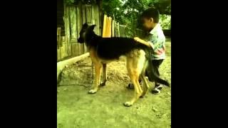 Köpek çocuğ