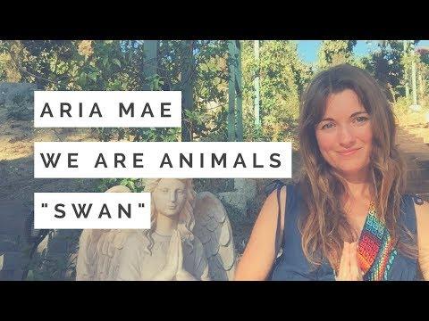 Swan Totem - Spirit Animal Guided Meditation #22