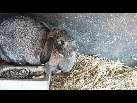 Gartenrundgang März 2017/ Wie soll das Kaninchen heißen?