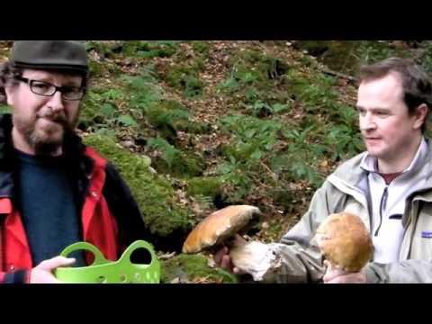 Wild Mushroom Hunting