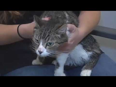 Pet of the Week: Malcolm