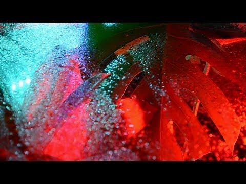 Ekali, Tynan & Hekler - Blood Moon (Official Audio)
