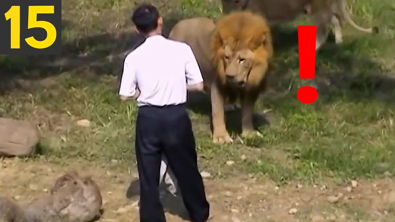 Top 15 STUPID ZOO GUESTS - what were they thinking?