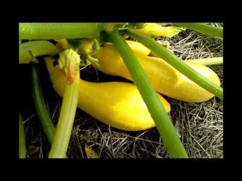 Kill Ants Slugs Black/Cayenne Pepper Non-Toxic Organic Vegetable Gardening