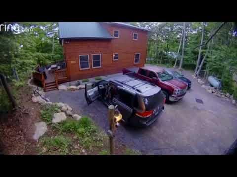 Black bear opens car doors, brings 4 cubs inside in Adirondacks