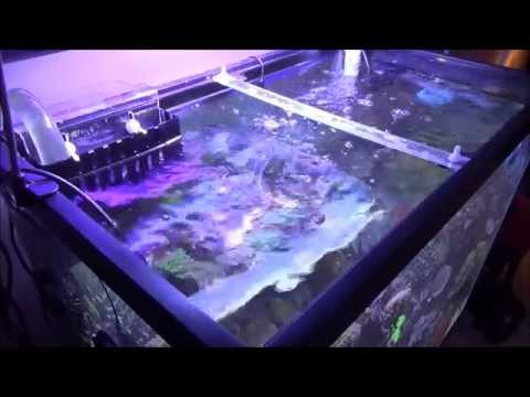 How to do a Water Change in a Salt Water Tank