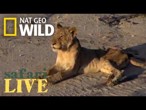 Safari Live - Day 157 | Nat Geo Wild