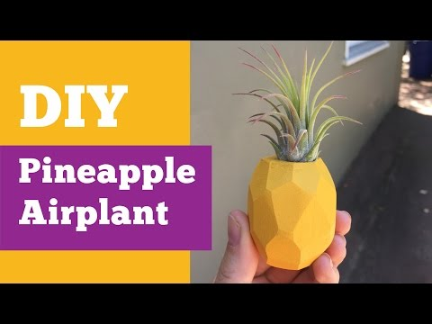 How to Make a Pineapple Magnet with Air Plants | Air Plant DIY | DIY with Caitlin